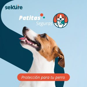 patitas seguras perros